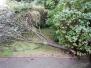 2017_08_10_zlomený strom v Lipniku